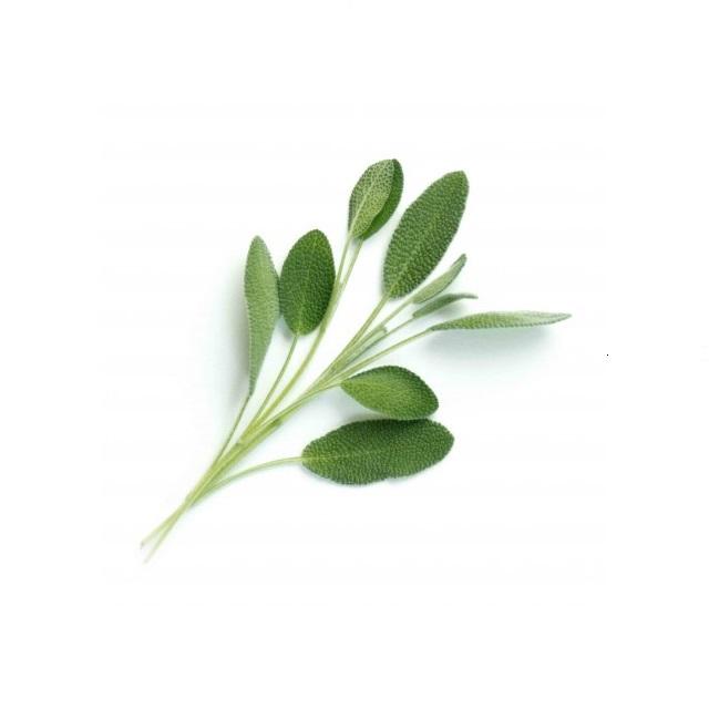 BIO Šalvěj pro chytré květináče VÉRITABLE® - LINGOT®