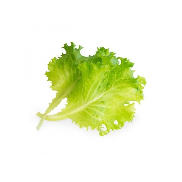 BIO Hlávkový salát pro chytré květináče VÉRITABLE® - LINGOT®